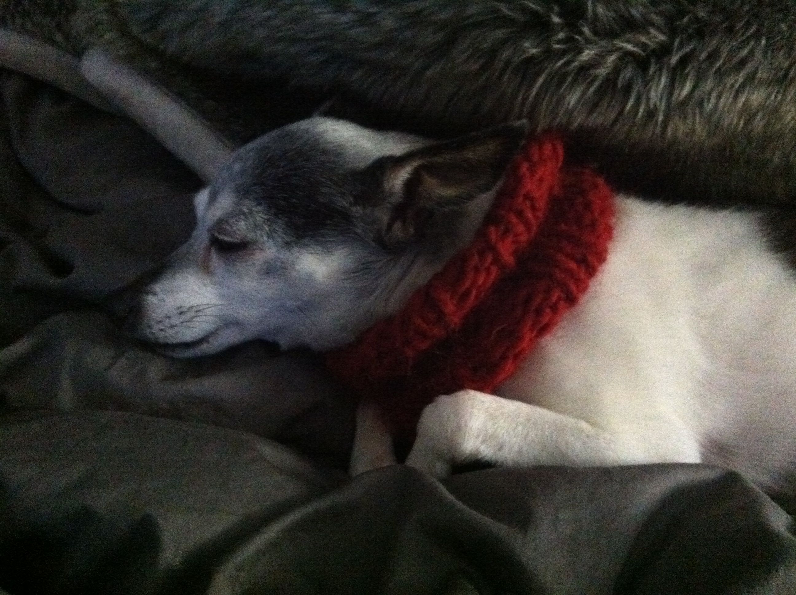 knitted wool cowls for little dogs | Loisaida Nest