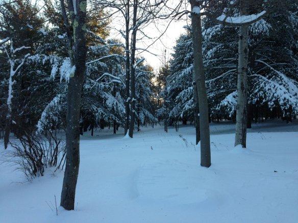 rsz_snowfront