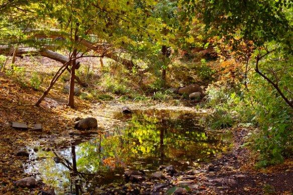 turtle pond in el jardin del paraiso