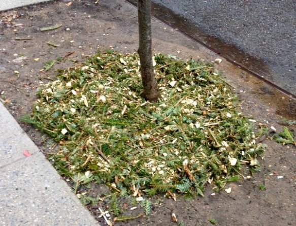 this year I was careful to not put too much fresh mulch around the bark like my friend Virginia advised.
