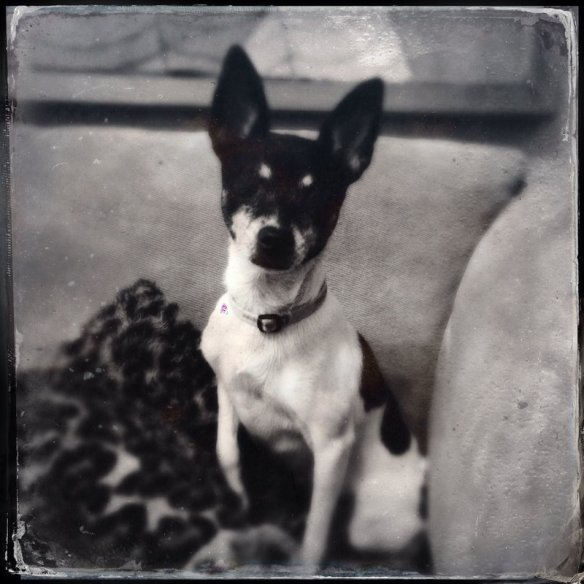 "Millie photographed with the Hipstamatic app using the Tinto 1884 lens and the D-Type Plate ""film"""