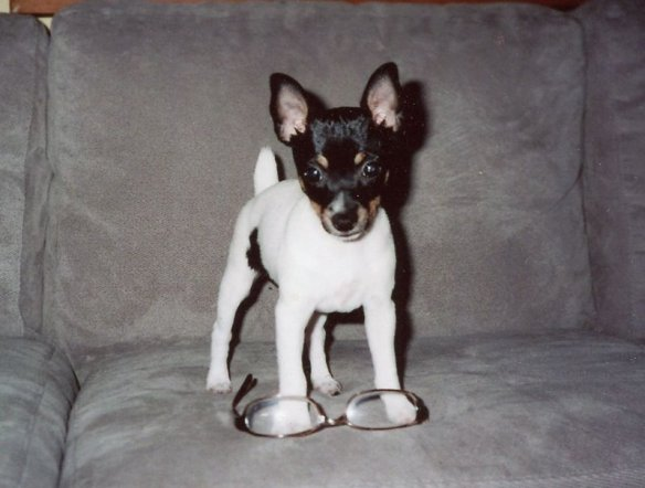 Millie at 3 months old