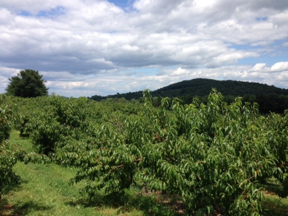 Fix Brothers Orchard in Hudson, NY