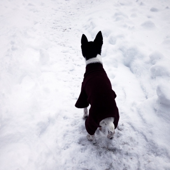 Millie on a snow path. Nothing stops her