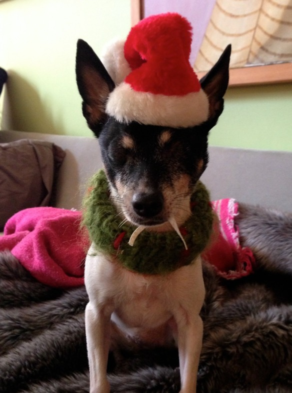 A toy fox terrier in a Santa hat - Millie